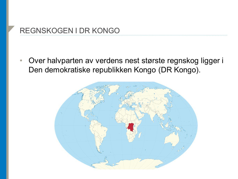 REGNSKOGEN I DR KONGO Over halvparten av verdens nest største regnskog ligger i Den demokratiske republikken Kongo (DR Kongo).