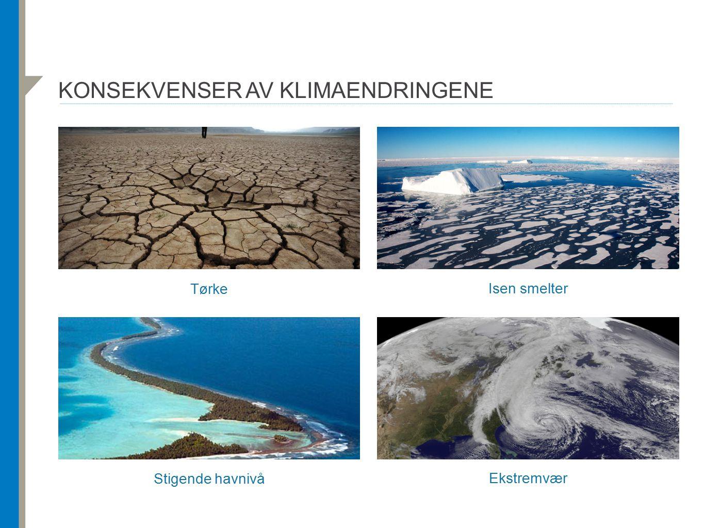 KONSEKVENSER AV KLIMAENDRINGENE Tørke Isen smelter Stigende havnivå Ekstremvær