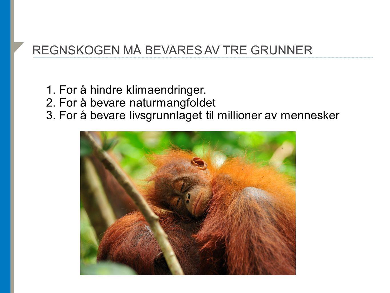 REGNSKOGEN MÅ BEVARES AV TRE GRUNNER 1. For å hindre klimaendringer. 2. For å bevare naturmangfoldet 3. For å bevare livsgrunnlaget til millioner av m