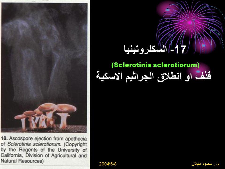 8\6\2004 م. ز. محمود عقيلان 16- السكلروتينيا (Sclerotinia sclerotiorum) في المشمش - غزو الفطر من الازهار الملفوحة الى الثمار الغير ناضجة