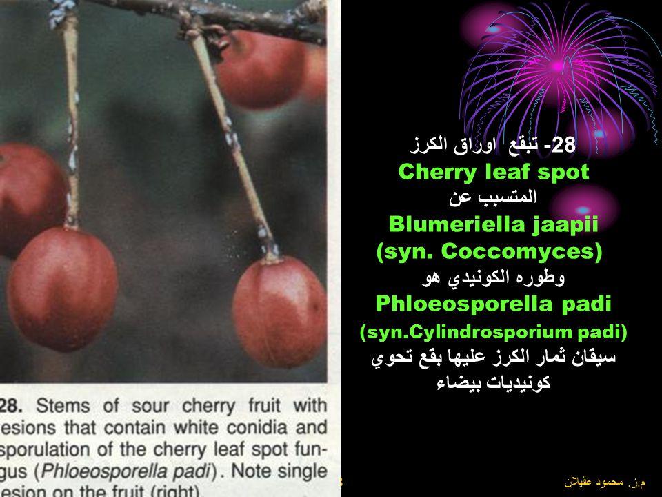 8\6\2004 م. ز. محمود عقيلان 27- تبقع اوراق الكرز Cherry leaf spot المتسبب عن Blumeriella jaapii (syn. Coccomyces) وطوره الكونيدي هو Phloeosporella pad