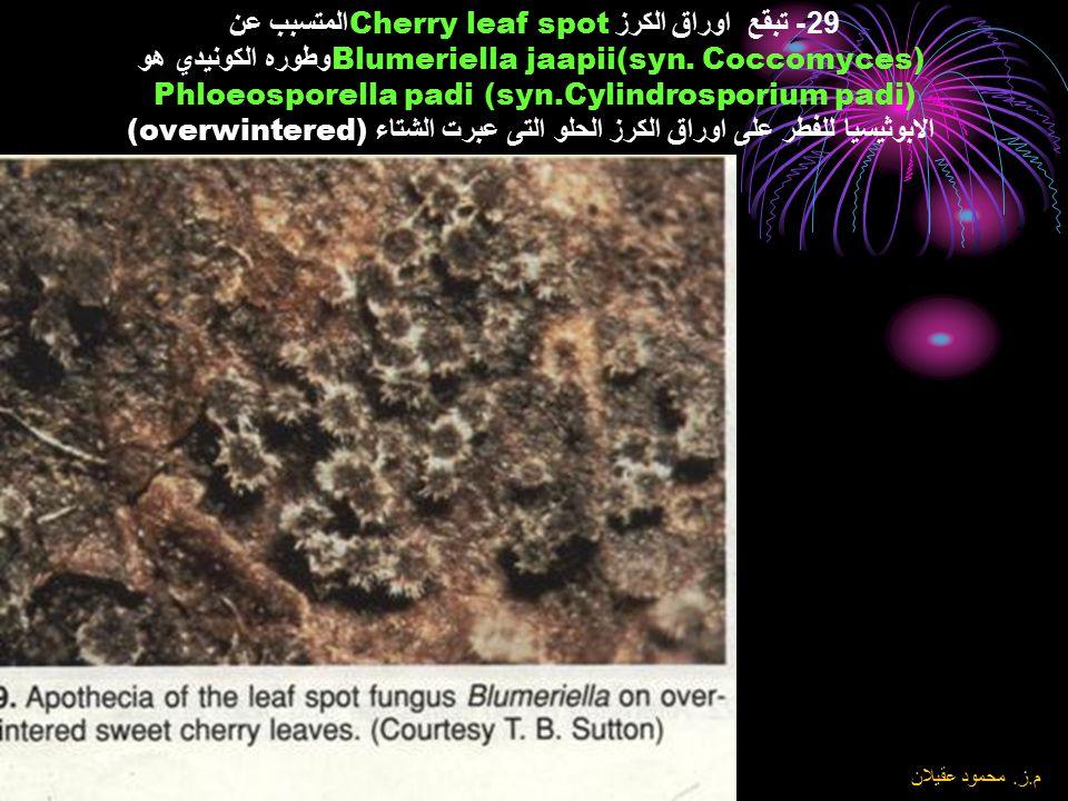 8\6\2004 م. ز. محمود عقيلان 28- تبقع اوراق الكرز Cherry leaf spot المتسبب عن Blumeriella jaapii (syn. Coccomyces) وطوره الكونيدي هو Phloeosporella pad