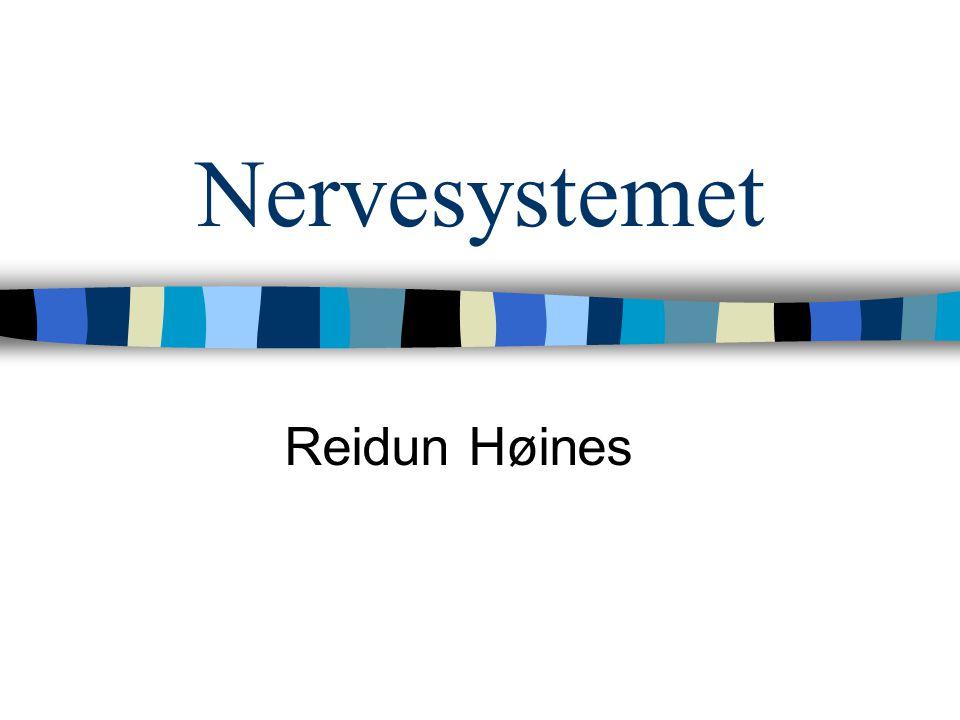 Nervesystemet Reidun Høines