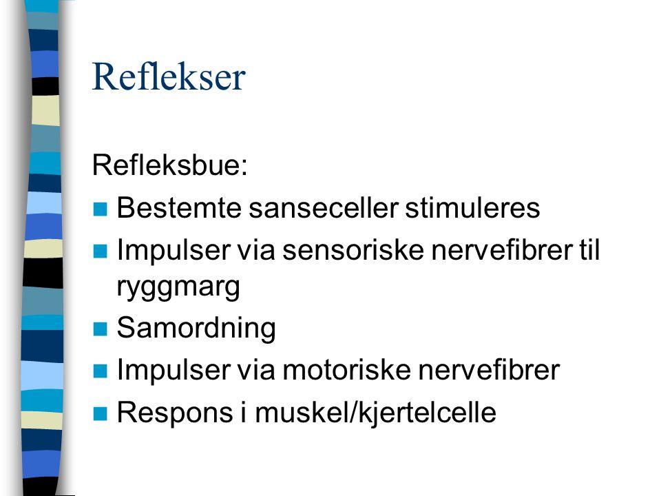 Reflekser Refleksbue: Bestemte sanseceller stimuleres Impulser via sensoriske nervefibrer til ryggmarg Samordning Impulser via motoriske nervefibrer R