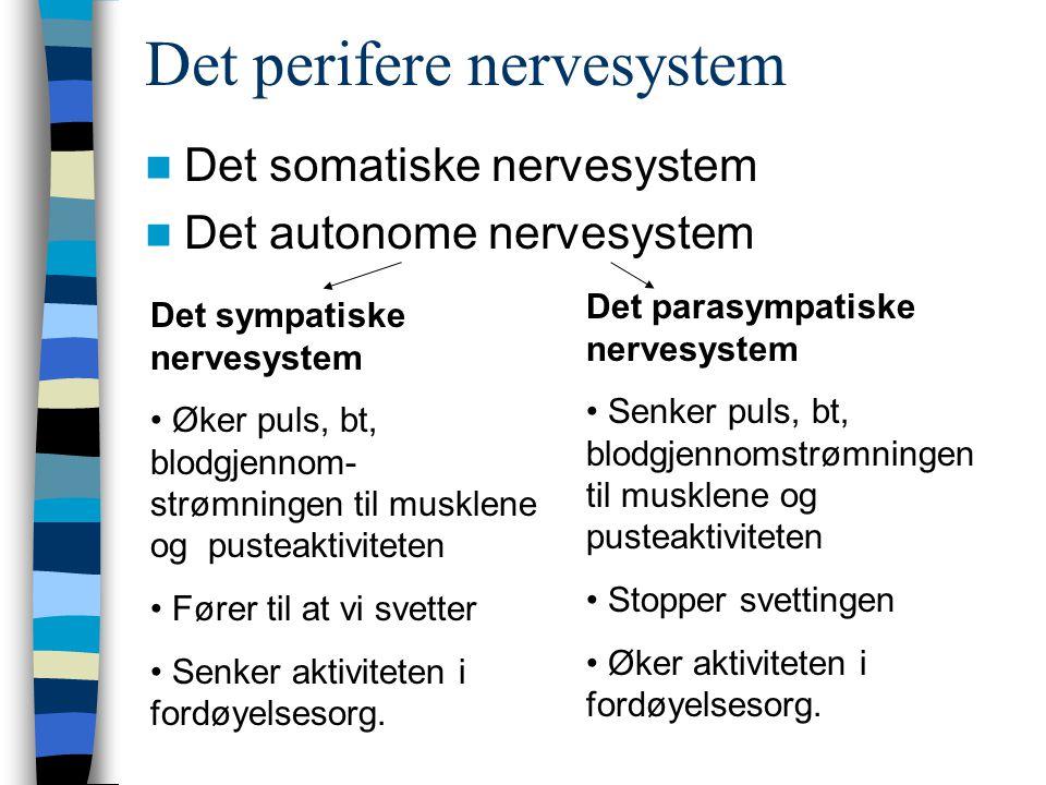 Det perifere nervesystem Det somatiske nervesystem Det autonome nervesystem Det sympatiske nervesystem Øker puls, bt, blodgjennom- strømningen til mus