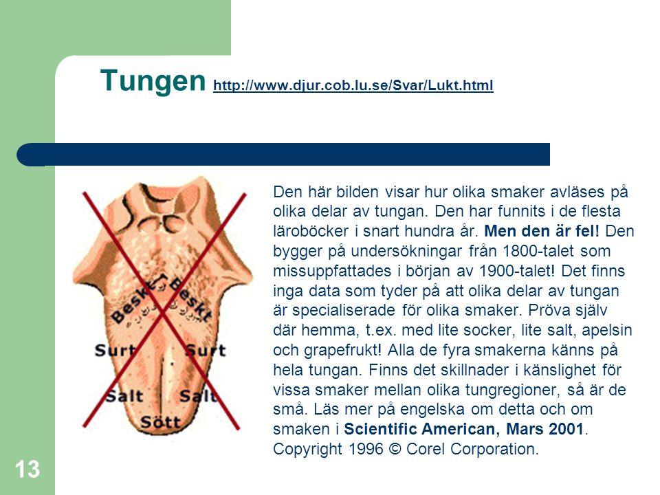 13 Tungen http://www.djur.cob.lu.se/Svar/Lukt.html http://www.djur.cob.lu.se/Svar/Lukt.html Den här bilden visar hur olika smaker avläses på olika del