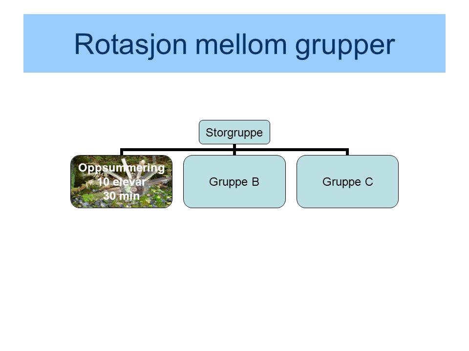 Rotasjon mellom grupper Storgruppe Oppsummering 10 elevar 30 min Gruppe BGruppe C