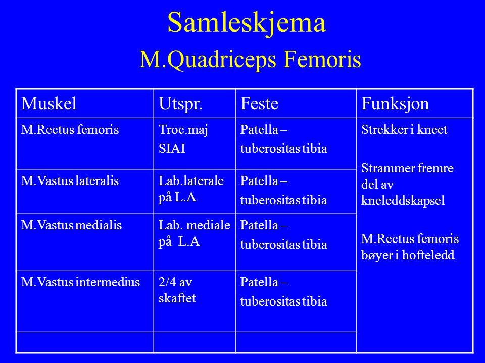 Samleskjema M.Quadriceps Femoris MuskelUtspr.FesteFunksjon M.Rectus femorisTroc.maj SIAI Patella – tuberositas tibia Strekker i kneet Strammer fremre
