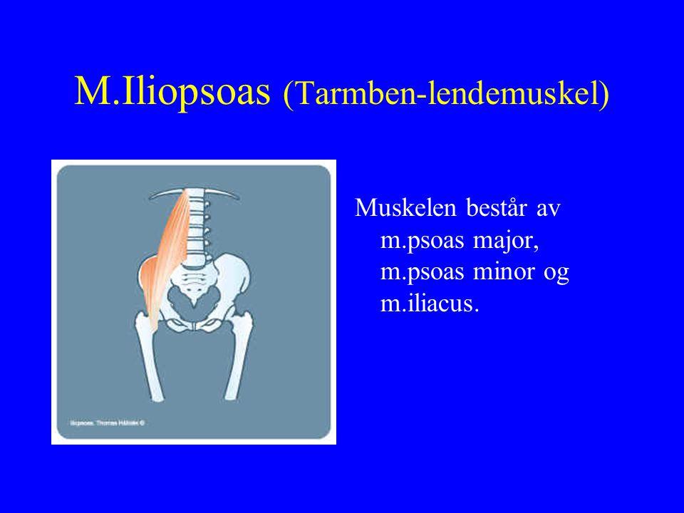 M.Vastus lateralis (den laterale, brede lårmuskelen) U: Utsiden av lårben F: Kneskjell