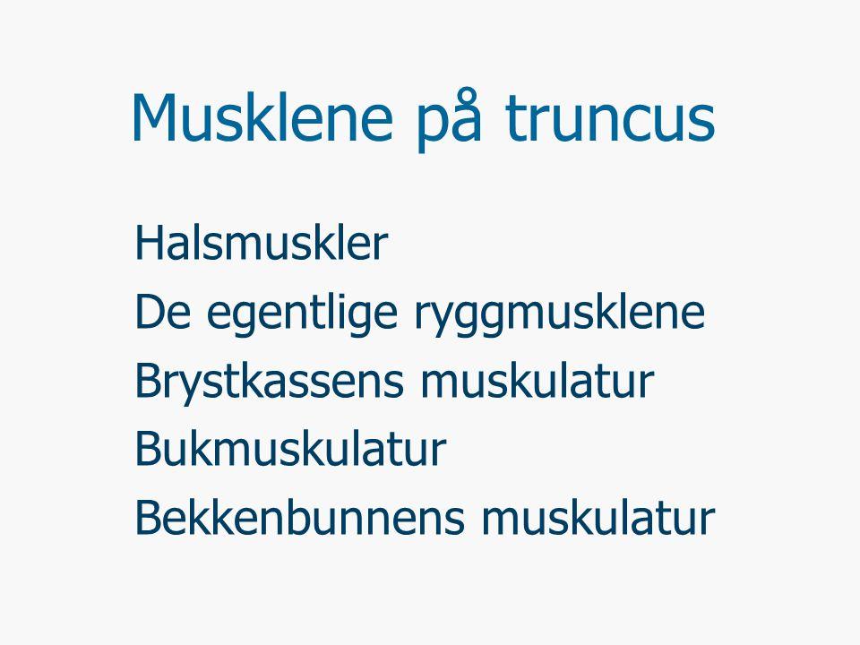 BUKMUSKLER ABDOMINALMUSKULATUR M.Rectus abdominis (Rette buksmuskel) M.Obliquus internus abdominis (Indre, skrå) M.Obliquus externus abdominis (Ytre, skrå) M.Transversus abdominis (Tverrgående b.) M.Quadratus lumborum (Firkantede lendemuskel)