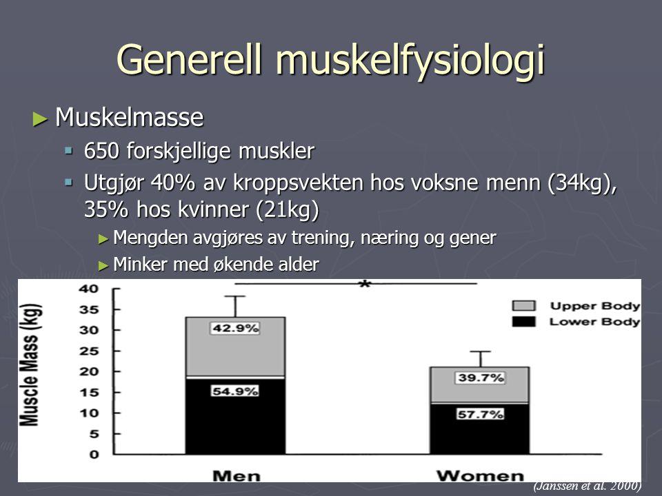 Generell muskelfysiologi ► Muskelmasse  650 forskjellige muskler  Utgjør 40% av kroppsvekten hos voksne menn (34kg), 35% hos kvinner (21kg) ► Mengde