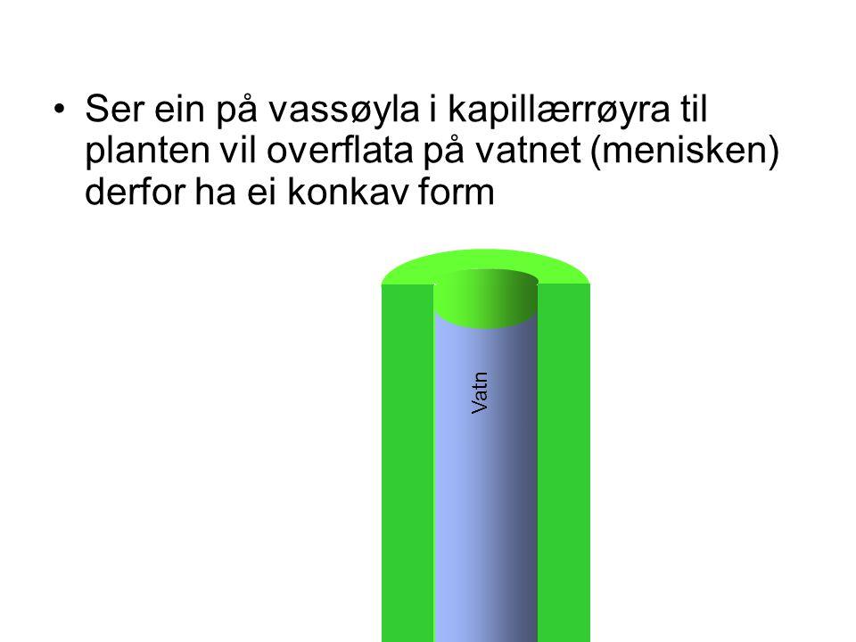 Ser ein på vassøyla i kapillærrøyra til planten vil overflata på vatnet (menisken) derfor ha ei konkav form Vatn