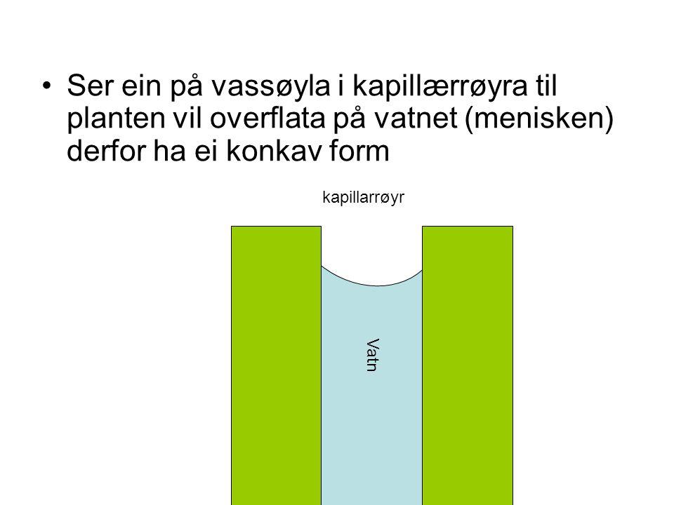 Ser ein på vassøyla i kapillærrøyra til planten vil overflata på vatnet (menisken) derfor ha ei konkav form Vatn kapillarrøyr