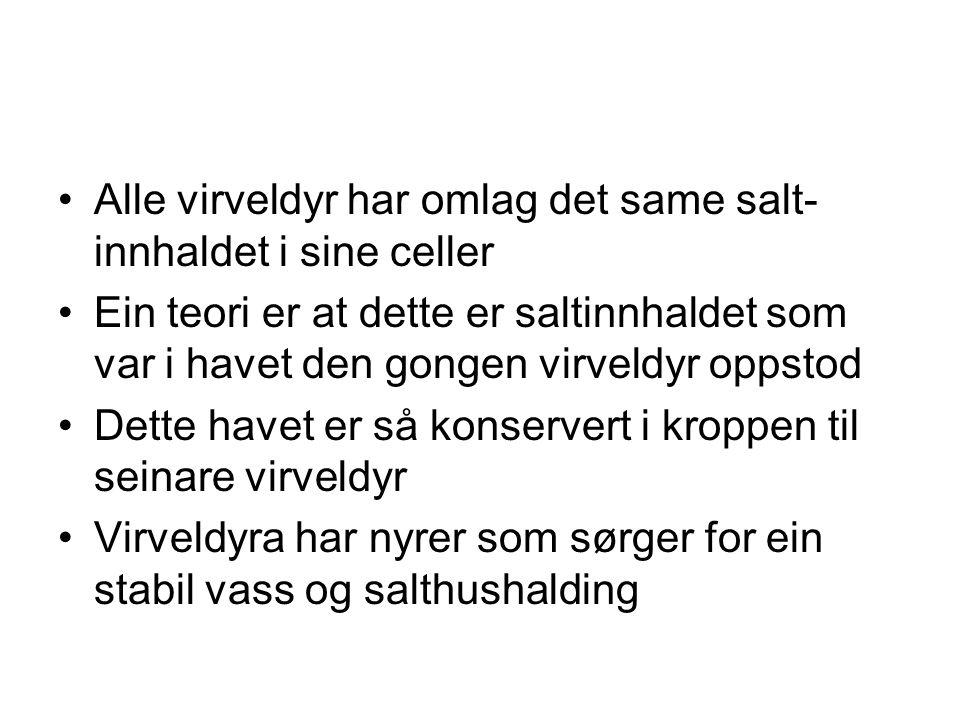 Alle virveldyr har omlag det same salt- innhaldet i sine celler Ein teori er at dette er saltinnhaldet som var i havet den gongen virveldyr oppstod De