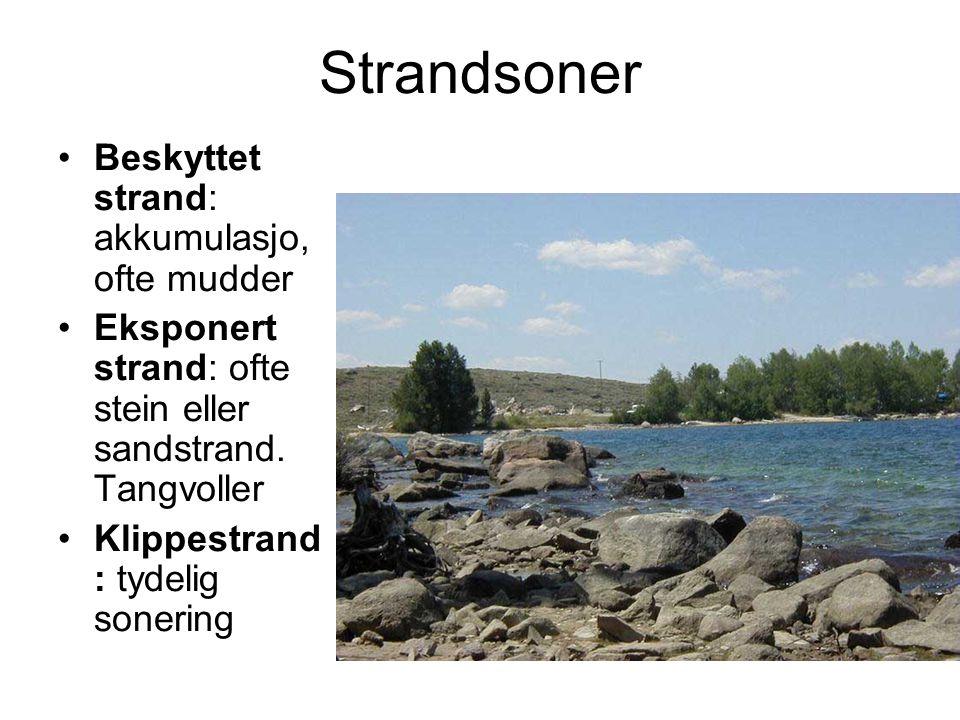 Strandsoner Beskyttet strand: akkumulasjo, ofte mudder Eksponert strand: ofte stein eller sandstrand. Tangvoller Klippestrand : tydelig sonering