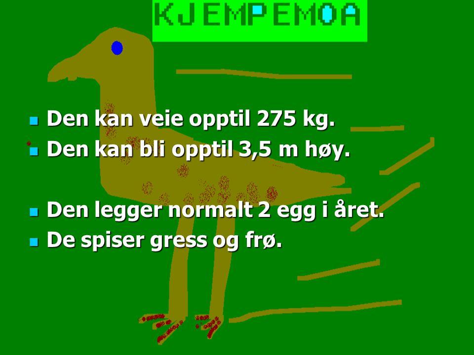 Den kan veie opptil 275 kg. Den kan veie opptil 275 kg.