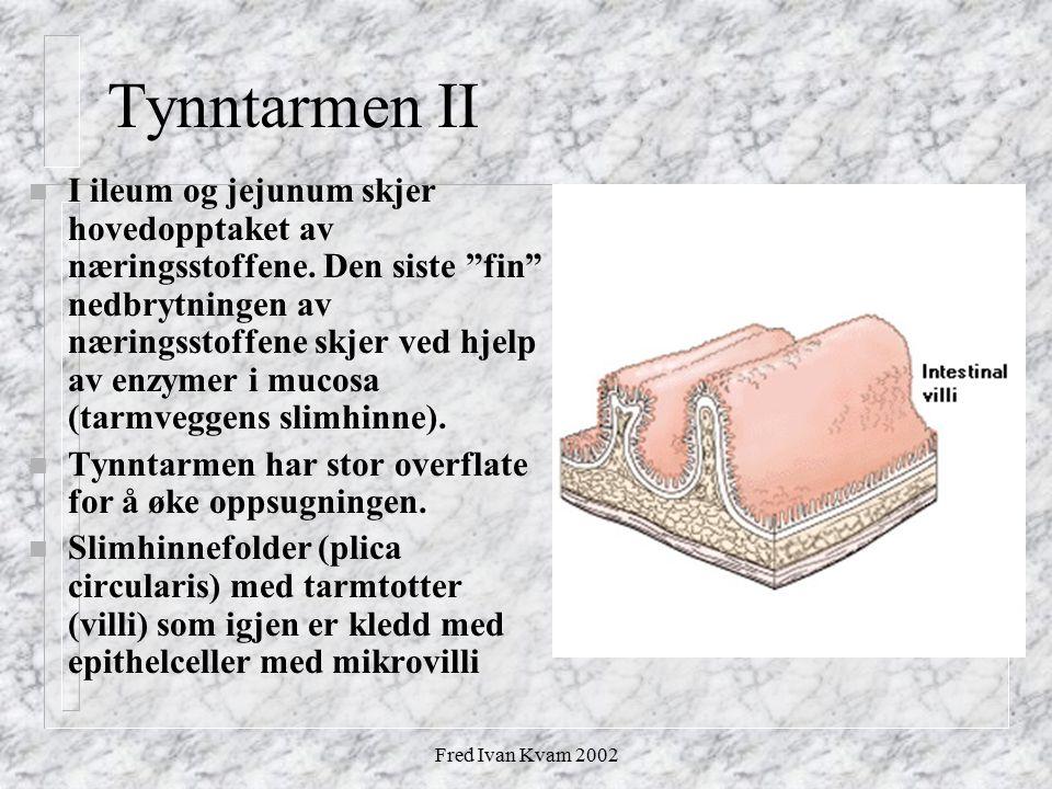 """Fred Ivan Kvam 2002 Tynntarmen II n I ileum og jejunum skjer hovedopptaket av næringsstoffene. Den siste """"fin"""" nedbrytningen av næringsstoffene skjer"""
