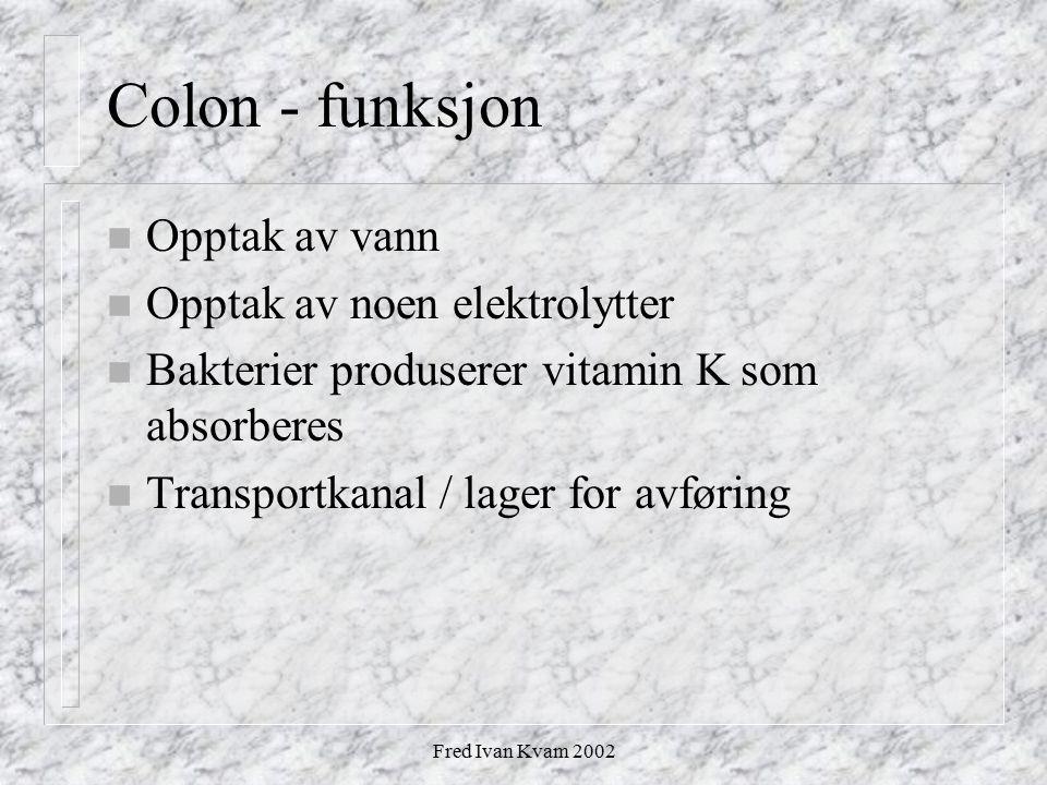 Fred Ivan Kvam 2002 Colon - funksjon n Opptak av vann n Opptak av noen elektrolytter n Bakterier produserer vitamin K som absorberes n Transportkanal