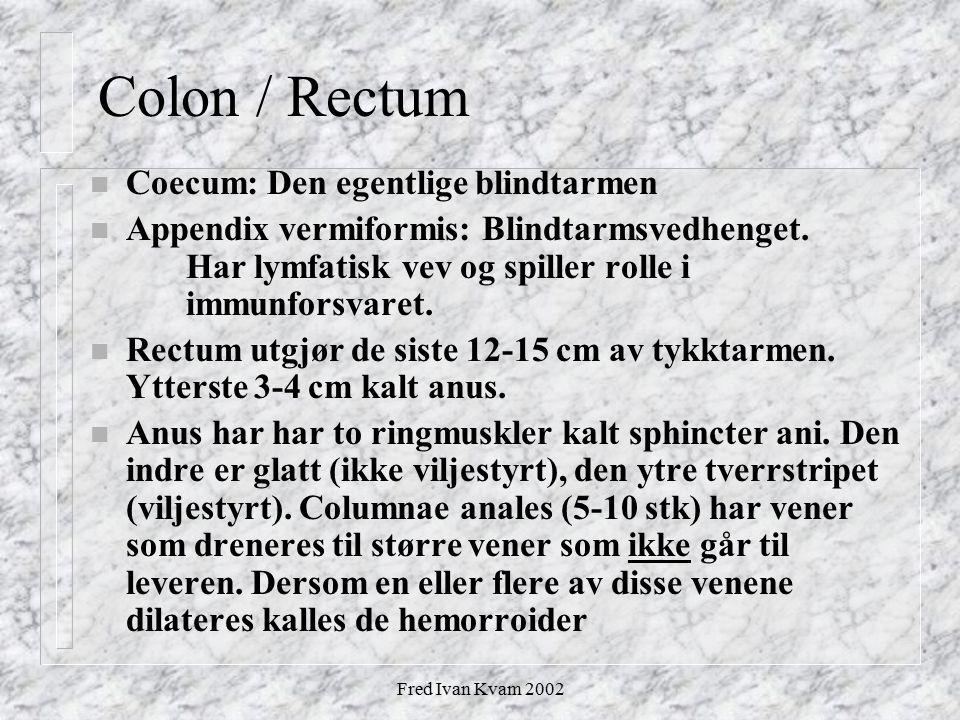 Fred Ivan Kvam 2002 Colon / Rectum n Coecum: Den egentlige blindtarmen n Appendix vermiformis: Blindtarmsvedhenget. Har lymfatisk vev og spiller rolle