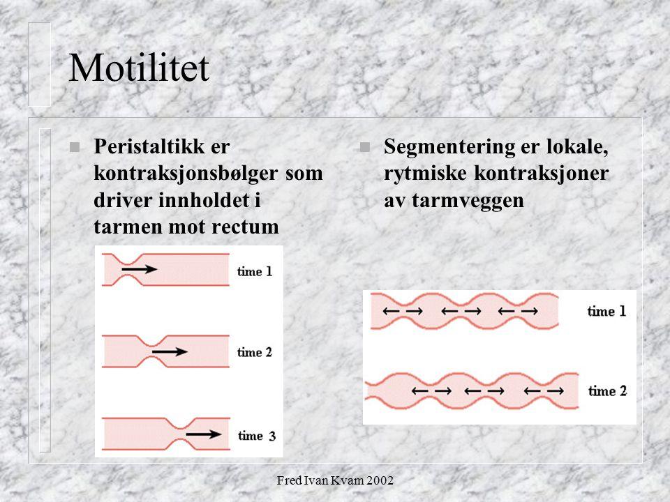 Fred Ivan Kvam 2002 Motilitet n Peristaltikk er kontraksjonsbølger som driver innholdet i tarmen mot rectum n Segmentering er lokale, rytmiske kontrak