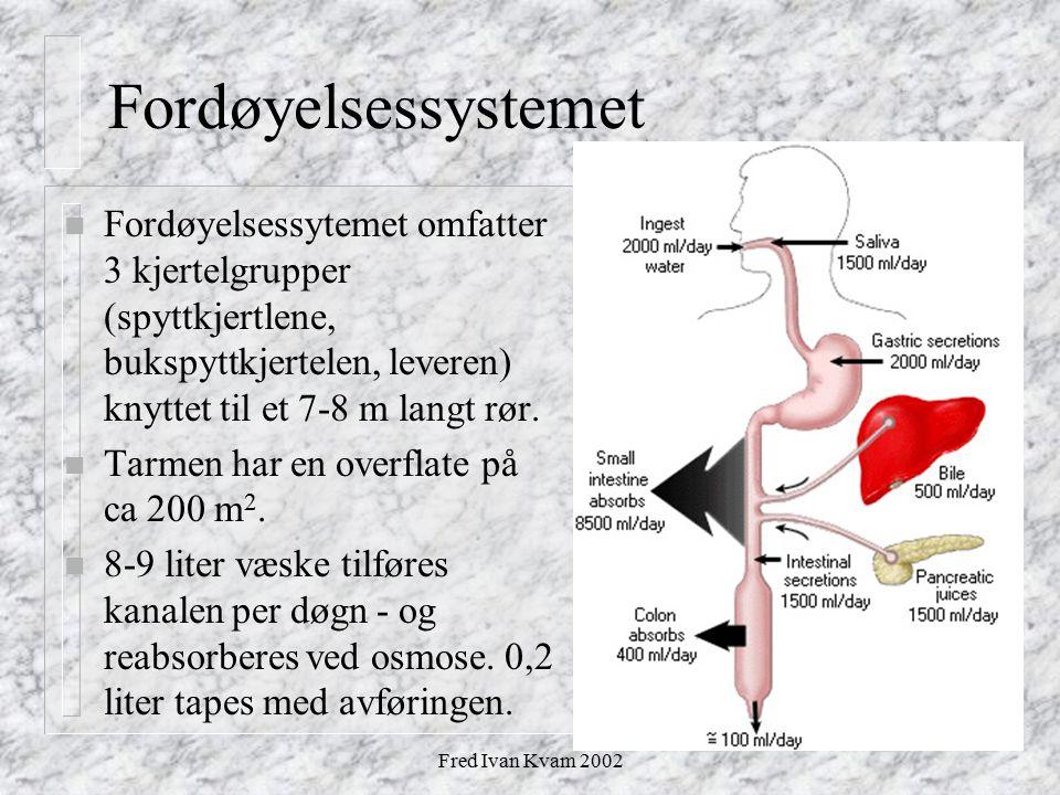 Fred Ivan Kvam 2002 Fordøyelsessystemet n Fordøyelsessytemet omfatter 3 kjertelgrupper (spyttkjertlene, bukspyttkjertelen, leveren) knyttet til et 7-8