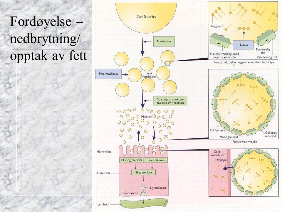 Fred Ivan Kvam 2002 Fordøyelse – nedbrytning/ opptak av fett