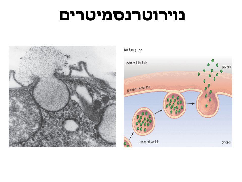 סוגי נוירונים