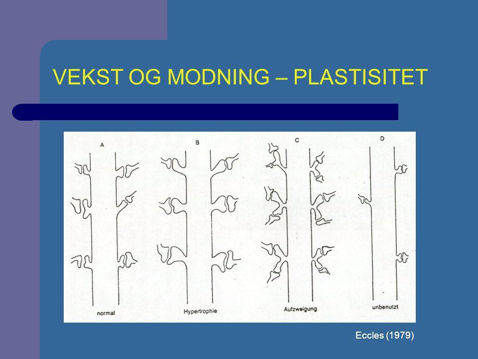 VEKST OG MODNING - PLASTISITET Rosenzweig & Leiman (1982)Fra Cole & Cole (1993, S. 154)