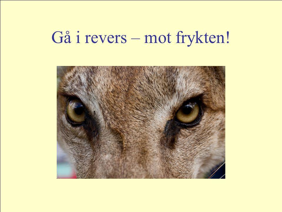 Gå i revers – mot frykten!