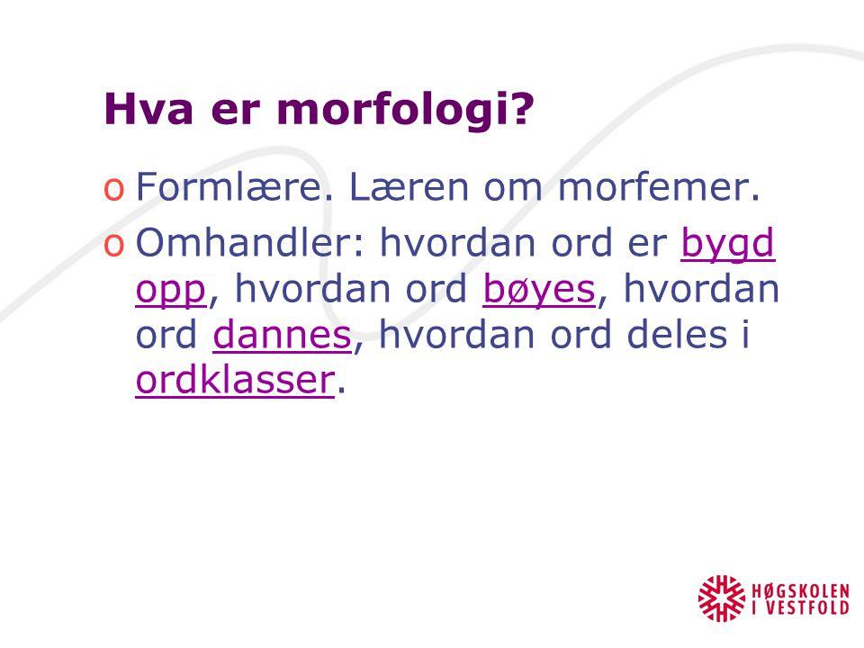 Morfologi LUB 1 28.08.09