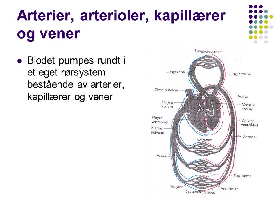 Arterier, arterioler, kapillærer og vener Blodet pumpes rundt i et eget rørsystem bestående av arterier, kapillærer og vener
