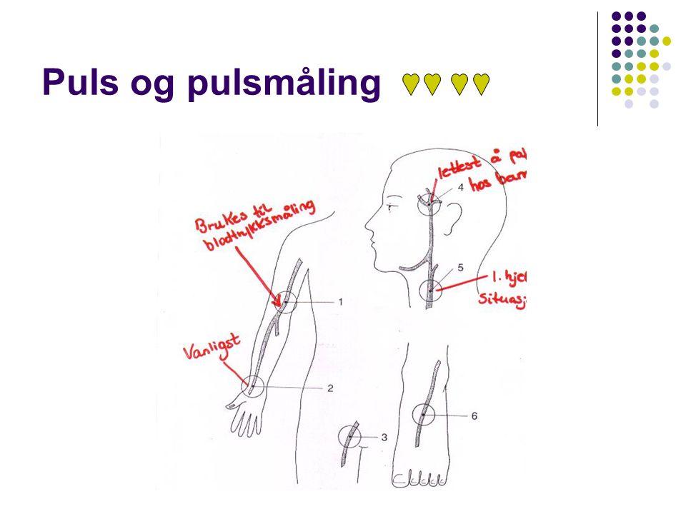 Puls og pulsmåling