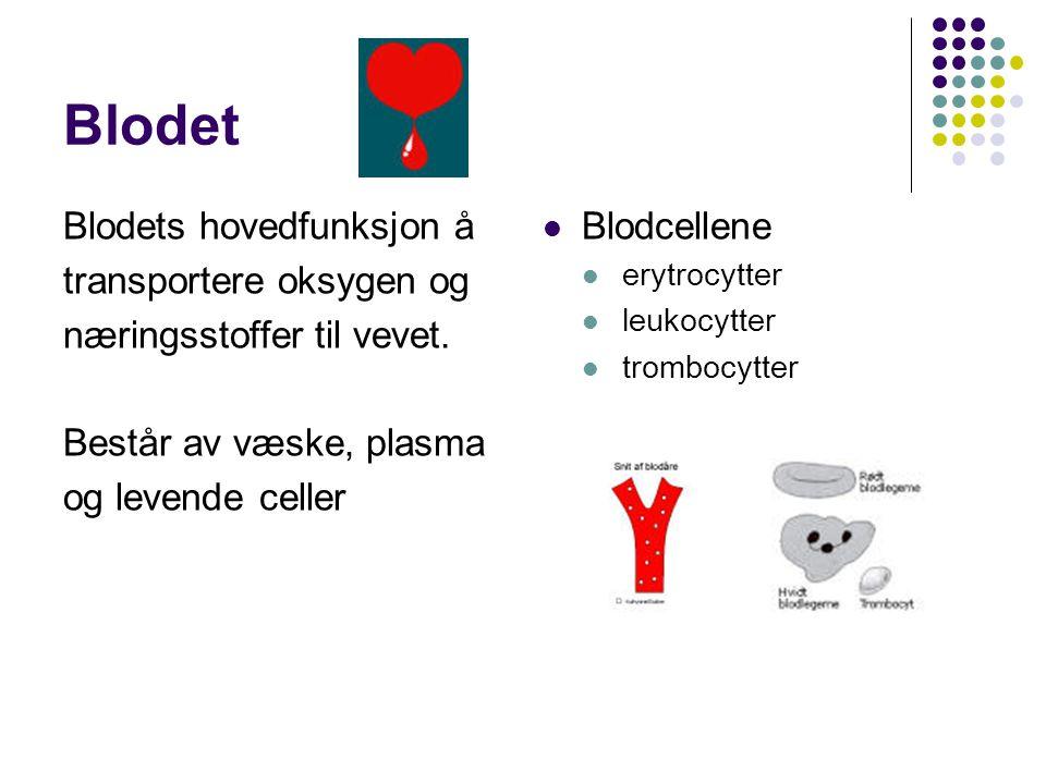 Blodet Blodets hovedfunksjon å transportere oksygen og næringsstoffer til vevet. Består av væske, plasma og levende celler Blodcellene erytrocytter le