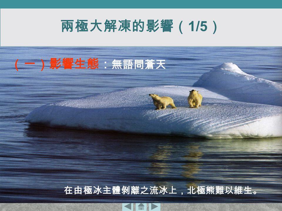 在由極冰主體剝離之流冰上,北極熊難以維生。 (一)影響生態: 無語問蒼天 兩極大解凍的影響( 1/5 )
