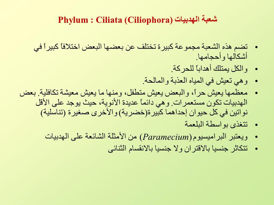 شعبة الهدبيات Phylum : Ciliata (Ciliophora) تضم هذه الشعبة مجموعة كبيرة تختلف عن بعضها البعض اختلافاً كبيراً في أشكالها وأحجامها. والكل يمتلك أهداباً