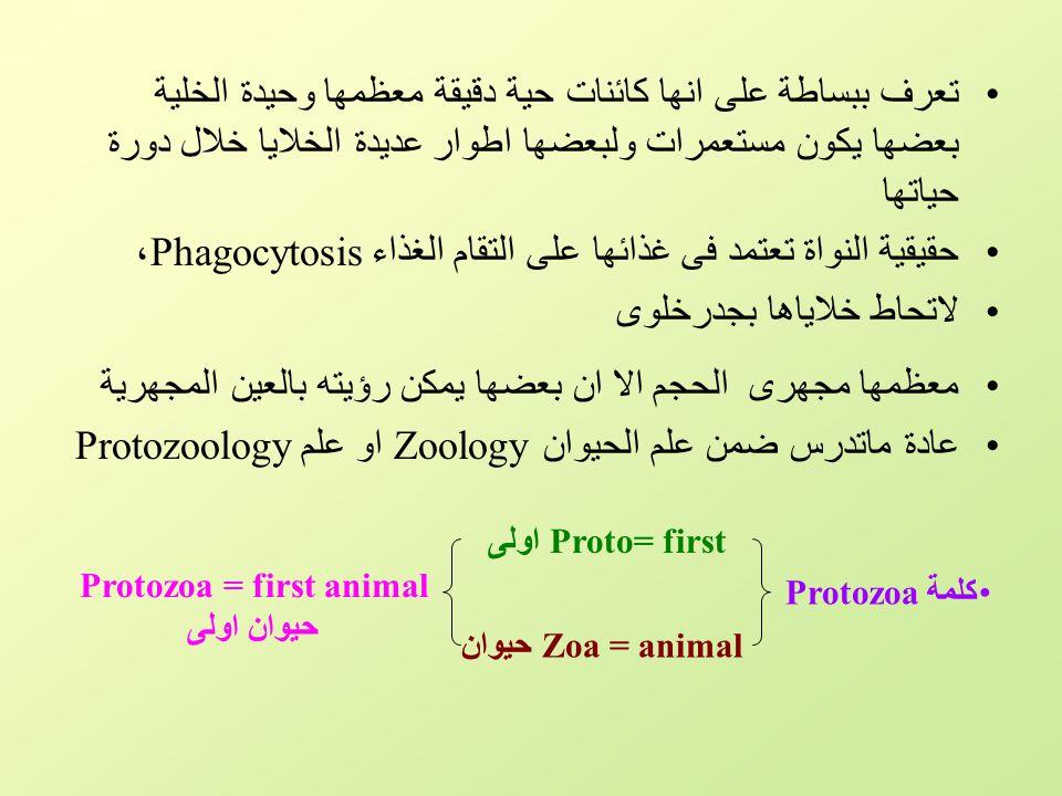 شعبة الهدبيات Phylum : Ciliata (Ciliophora) تضم هذه الشعبة مجموعة كبيرة تختلف عن بعضها البعض اختلافاً كبيراً في أشكالها وأحجامها.