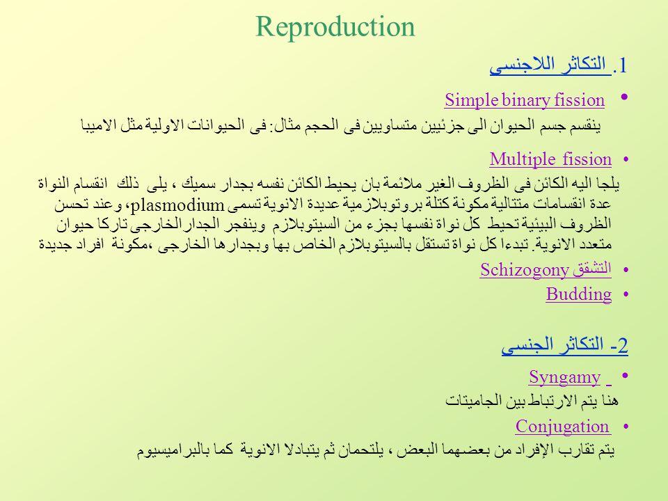 Reproduction 1. التكاثر اللاجنسى Simple binary fission ينقسم جسم الحيوان الى جزئيين متساويين فى الحجم مثال: فى الحيوانات الاولية مثل الاميبا Multiple