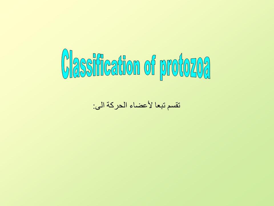 3- Ciliata (Cilia) 1- Sacrodina (Pseudopods) 2- Mastigophora (Flagella) 4- Sporozoa )لاتتحرك) Protozoa