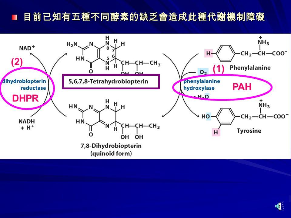 (1) (2) 目前已知有五種不同酵素的缺乏會造成此種代謝機制障礙 PAH DHPR