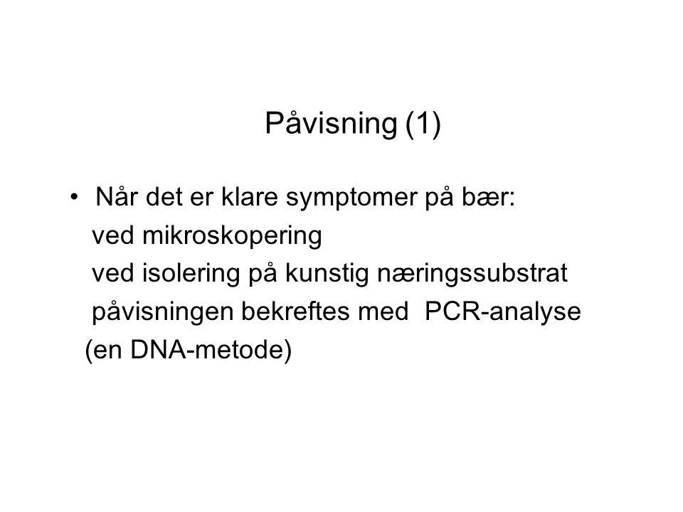 Påvisning (2) Ved mistanke om latent smitte: parakvat-test av 300 bladstilker i laboratoriet Positive funn bekreftes alltid med PCR-analyse