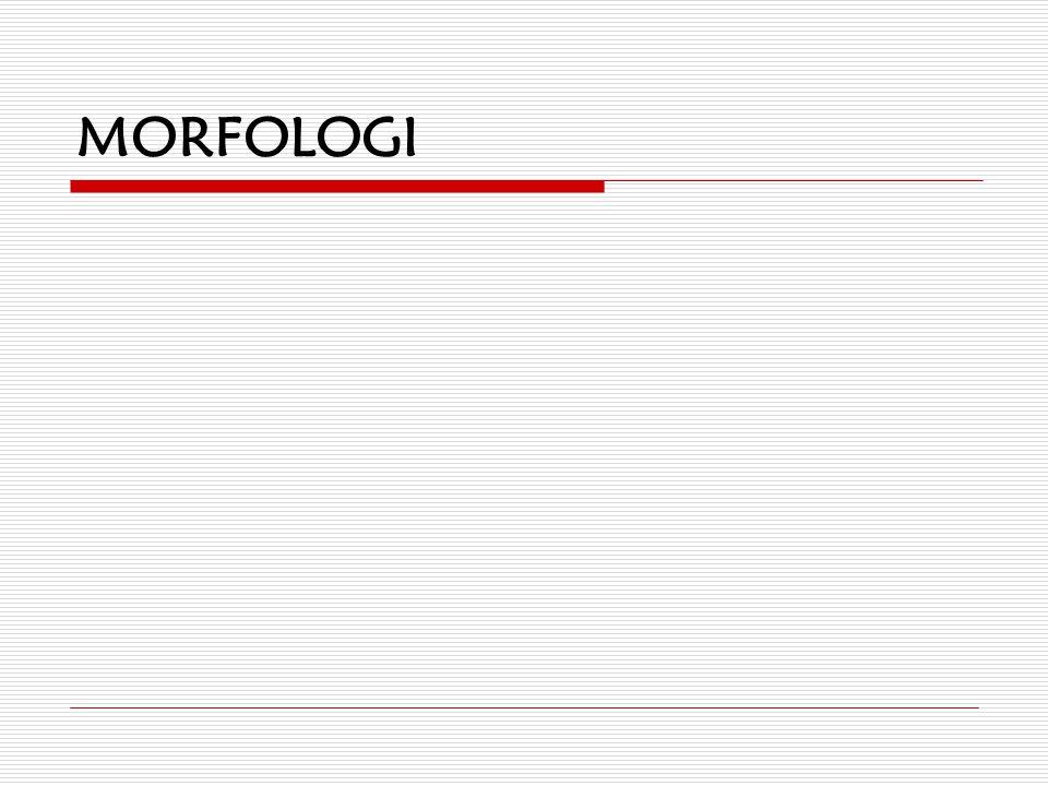 Program for i dag  Morfologi  Syntaks  Tekstlingvistikk