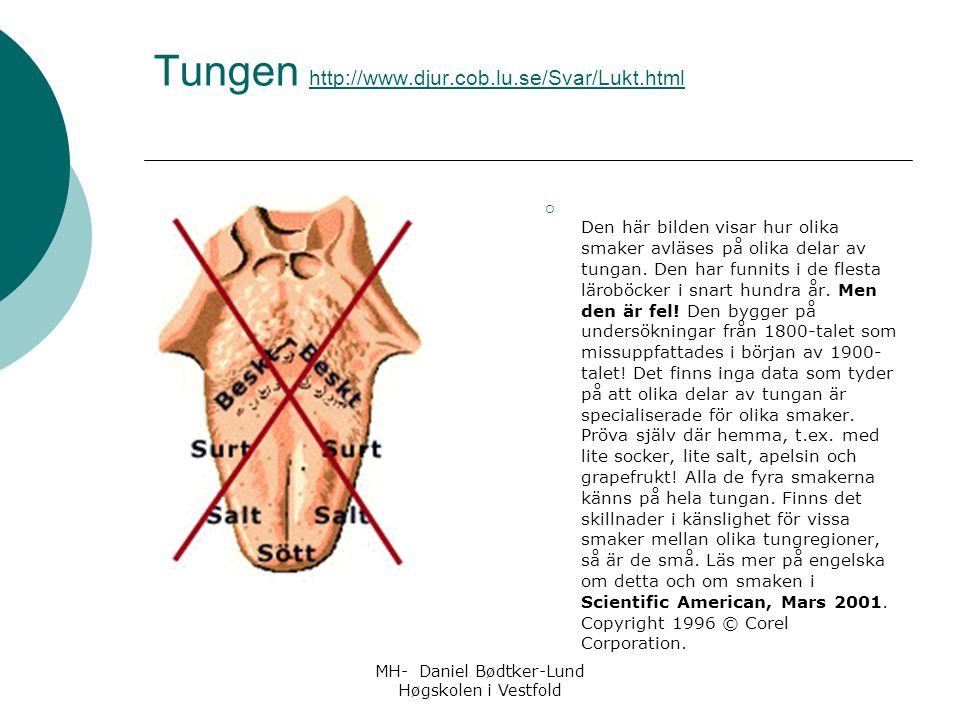 MH- Daniel Bødtker-Lund Høgskolen i Vestfold Tungen http://www.djur.cob.lu.se/Svar/Lukt.html http://www.djur.cob.lu.se/Svar/Lukt.html  Den här bilden