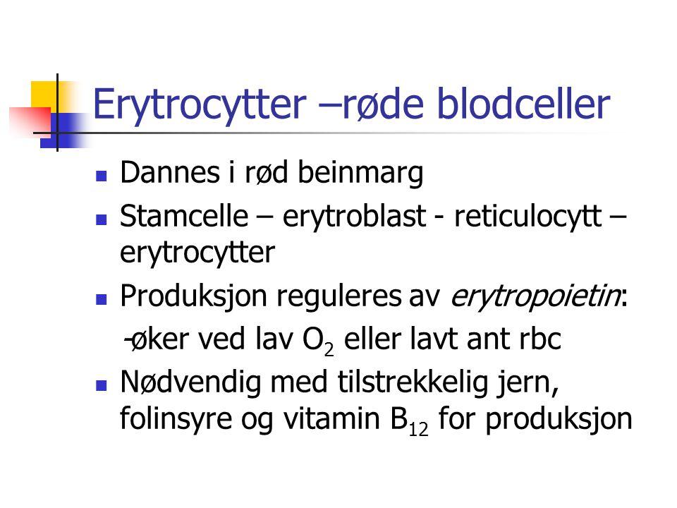 Erytrocytter –røde blodceller Dannes i rød beinmarg Stamcelle – erytroblast - reticulocytt – erytrocytter Produksjon reguleres av erytropoietin: -øker