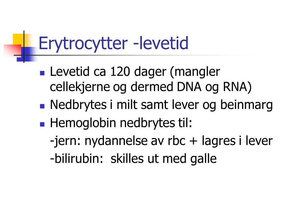 Erytrocytter -levetid Levetid ca 120 dager (mangler cellekjerne og dermed DNA og RNA) Nedbrytes i milt samt lever og beinmarg Hemoglobin nedbrytes til