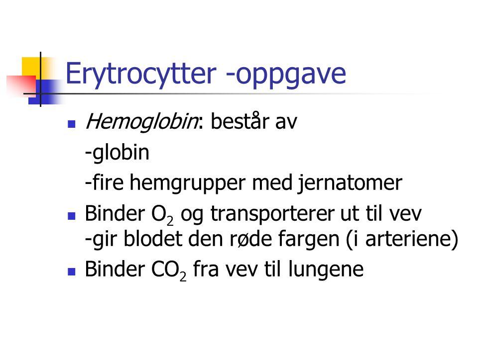 Erytrocytter -oppgave Hemoglobin: består av -globin -fire hemgrupper med jernatomer Binder O 2 og transporterer ut til vev -gir blodet den røde fargen