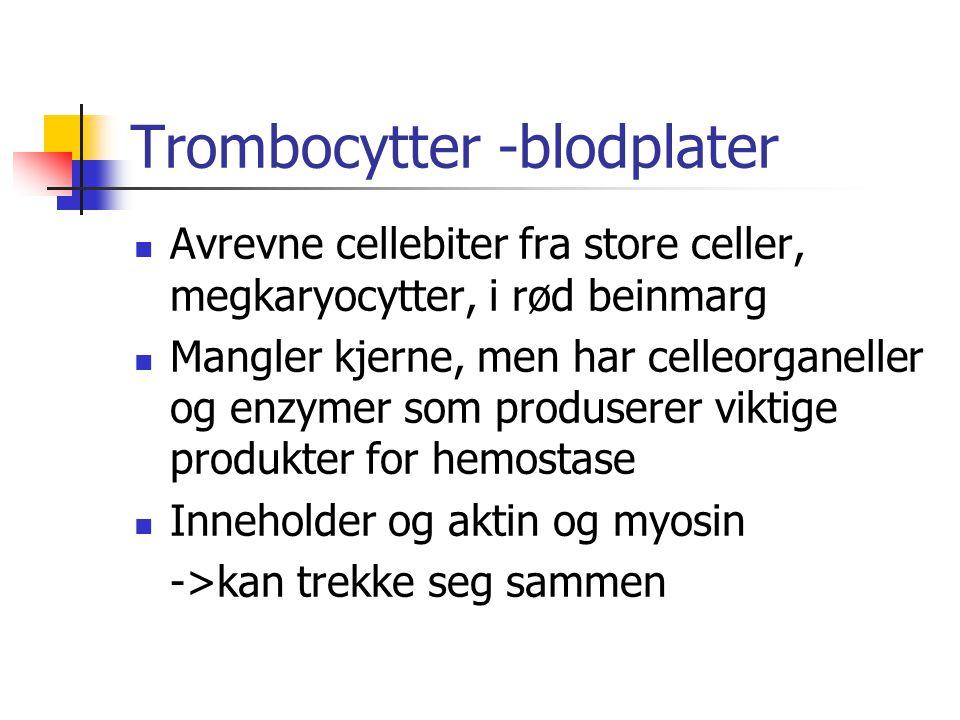 Trombocytter -blodplater Avrevne cellebiter fra store celler, megkaryocytter, i rød beinmarg Mangler kjerne, men har celleorganeller og enzymer som pr