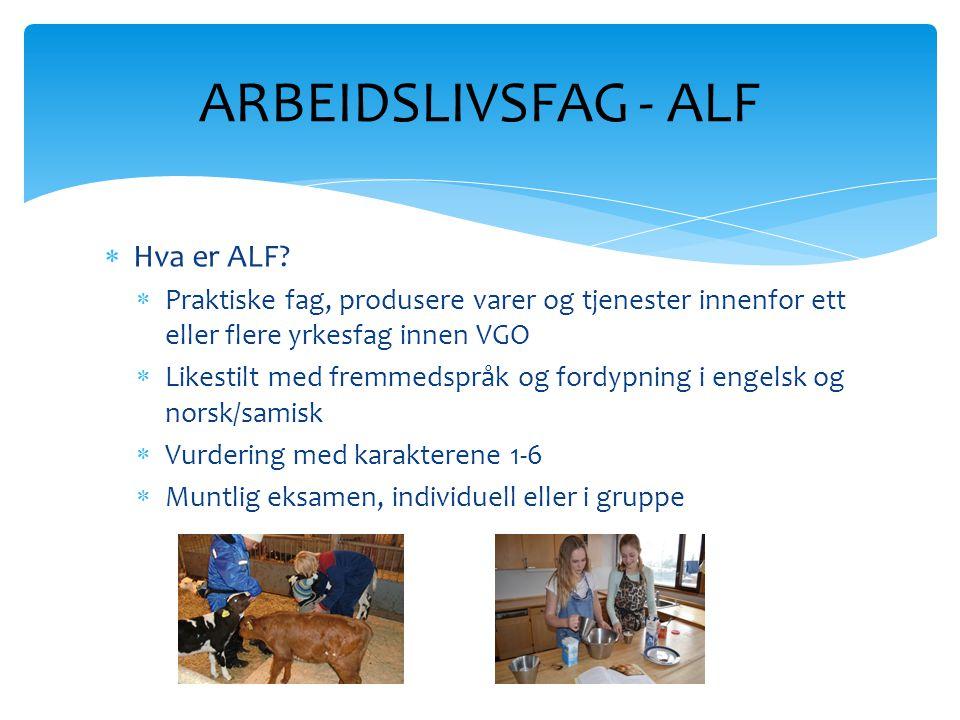  Hva er ALF?  Praktiske fag, produsere varer og tjenester innenfor ett eller flere yrkesfag innen VGO  Likestilt med fremmedspråk og fordypning i e