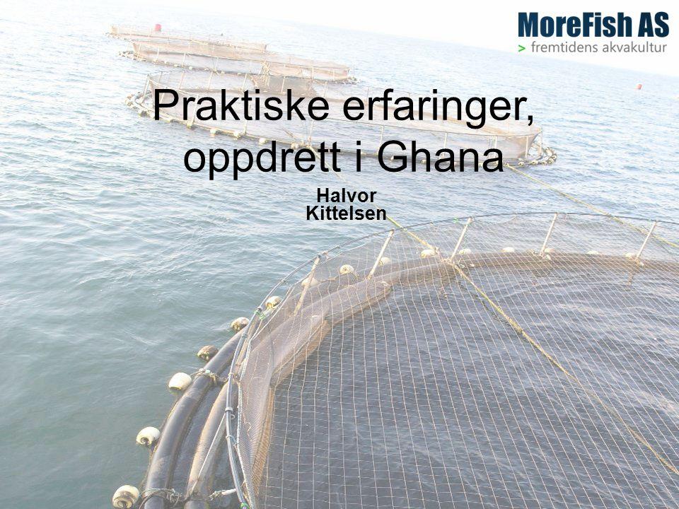 Praktiske erfaringer, oppdrett i Ghana Halvor Kittelsen