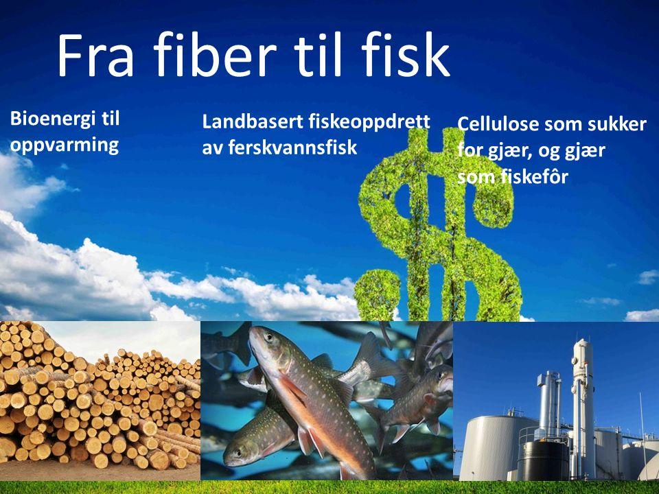 Fra fiber til fisk Landbasert fiskeoppdrett av ferskvannsfisk Bioenergi til oppvarming Cellulose som sukker for gjær, og gjær som fiskefôr