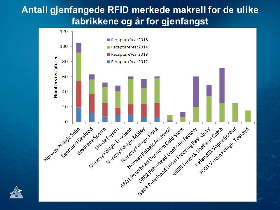 Antall gjenfangede RFID merkede makrell for de ulike fabrikkene og år for gjenfangst